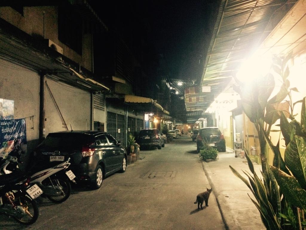 路地を入ると暗い。猫と犬しか居ない。